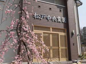 松戸中央霊園(紅梅)
