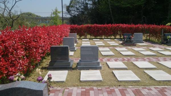 3区芝生墓地赤芽